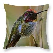 A Hummingbird Rainbow Throw Pillow