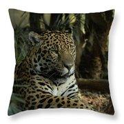 A Jaguar's Gaze Throw Pillow