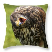 A Juvenille Peregrine Falcon Throw Pillow
