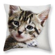 A Kittens Helping Hand Throw Pillow