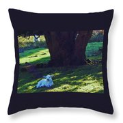 A Lamb In Wales Throw Pillow
