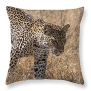 A Leopard, Panthera Pardus Throw Pillow