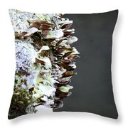 A Lichen Abstract 2013 Throw Pillow
