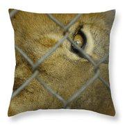 A Lions Eye Throw Pillow