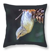 A Little Bird Eating Pine Cone Seeds  Throw Pillow