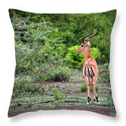 A Male Impala In Lake Manyara National Park. Tanzania. Africa. Throw Pillow