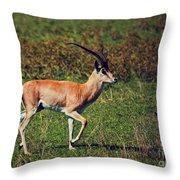 A Male Impala In Ngorongoro Crater. Tanzania Throw Pillow