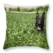 A Military Working Dog Sits In A Field Throw Pillow by Stocktrek Images