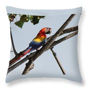 A Moment Of Rest Throw Pillow