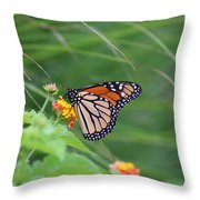 A Monarch Butterfly At Rest Throw Pillow