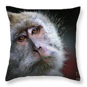 A Monkey's Look Throw Pillow