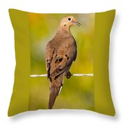 A Morning Dove Throw Pillow