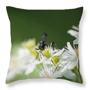 A Nectar Drink For This Black Mud Dauber   Throw Pillow