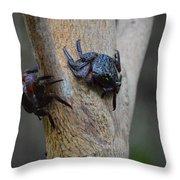 A Nice Pair Throw Pillow