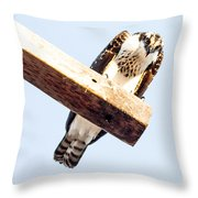 A Osprey Throw Pillow