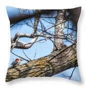 A Pair Of Red-bellied Woodpeckers Throw Pillow