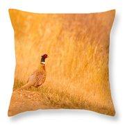 A Pheasant  Throw Pillow