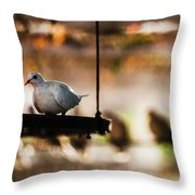 A Pigeon In A Cage Throw Pillow