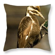 A Pileated With Intent Throw Pillow