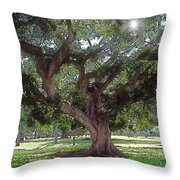 A Place In The Sun Throw Pillow by Terry Reynoldson