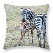 A Plains Zebra, Equus Quagga, Nursing Throw Pillow