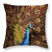 A Preening Peacock  Throw Pillow