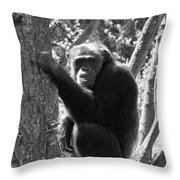 A Primate Throw Pillow