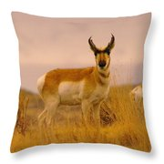 A Pronghorn Gazes Throw Pillow