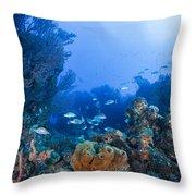 A Quiet Underwater Day Throw Pillow
