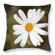 A Rain Spattered Daisy Throw Pillow