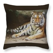 A Real Kitty Throw Pillow