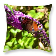 A Red Admiral On A Purple Budlier Throw Pillow