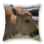 A Red Dog In Yellowstone Throw Pillow