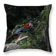 A Red Green And Blue Macaw On A Branch In The Jurong Bird Park Throw Pillow