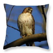 A Red Tail Hawk Throw Pillow