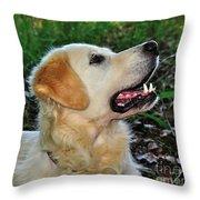 A Retriever's Loving Glance Throw Pillow