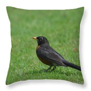 A Robin In June Throw Pillow