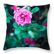 A Rose Blooms Throw Pillow