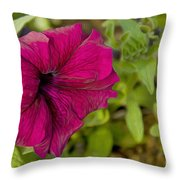 A Rose In The Garden Throw Pillow