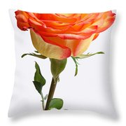 A Rose Is A Rose Is A Rose Throw Pillow by Juergen Roth