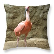 A Scarlet Ibis Stands Perched On A Rock Throw Pillow