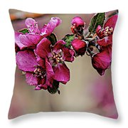 A Sign Of Spring Throw Pillow