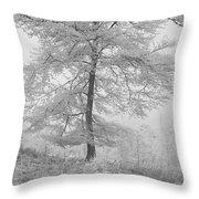A Single Infrared Beech Tree Throw Pillow