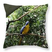 A Single Macaw Bird On A Branch Inside The Jurong Bird Park Throw Pillow