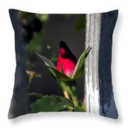 A Single Rosebud Throw Pillow