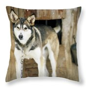 A Sled Dog Stands By Its Kennel Throw Pillow