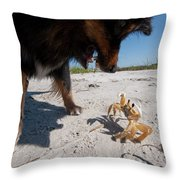 A Small Dog Fights With A Crab Throw Pillow