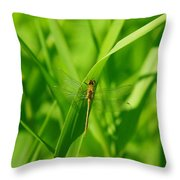 A Small Dragonfly Throw Pillow