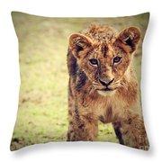 A Small Lion Cub Portrait. Tanzania Throw Pillow