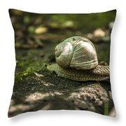 A Snail's Pace Throw Pillow